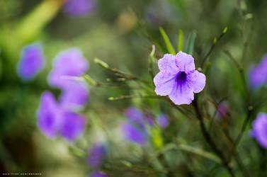 Moorning Flower
