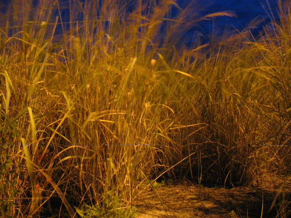 Nighttime Sea Grass by rewstargazer