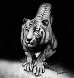 Tiger Study by kimgauge
