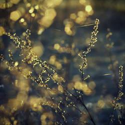 winter's eerie glow. by Luincale