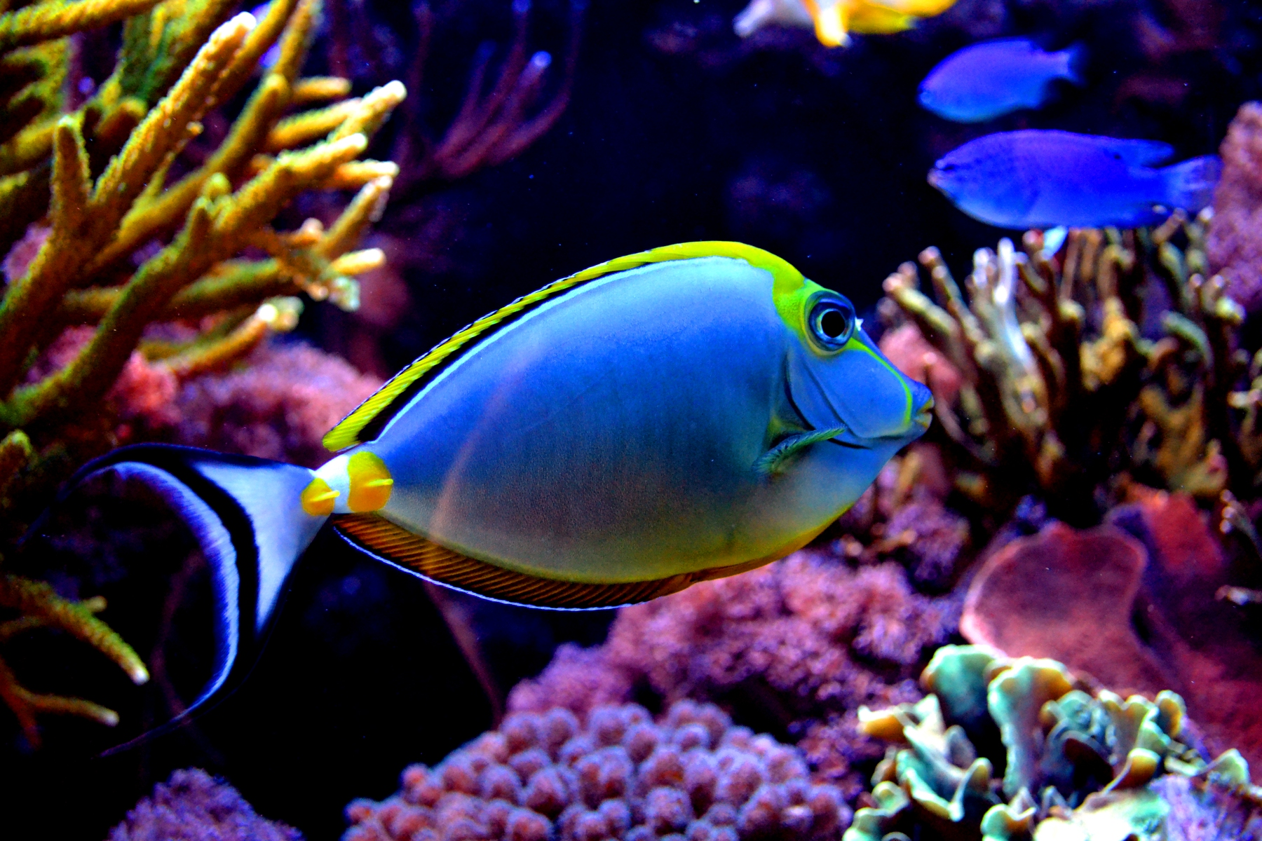 Colorful fish ii by xbiscuits on deviantart for Colorful fish pictures