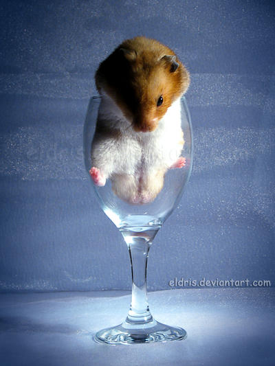 Wallpaper Prices on Hamster Wine   1 By  Eldris On Deviantart