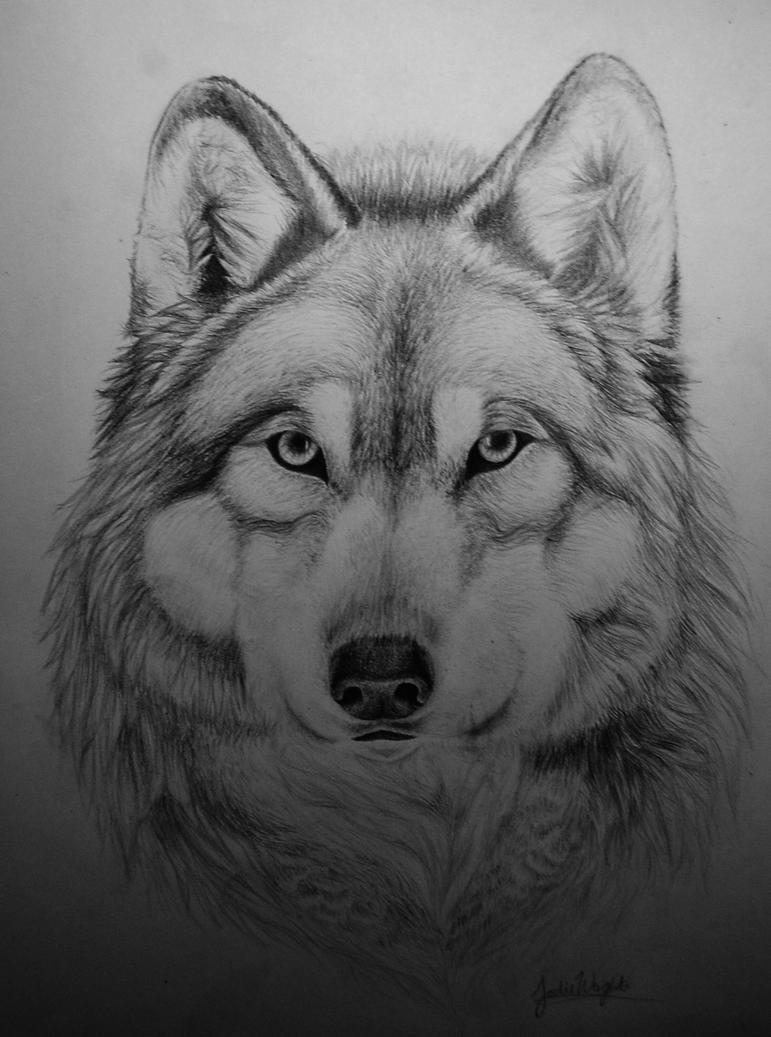 Wolf by x-Tuari-x