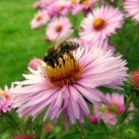 Little Bee by jellybear07