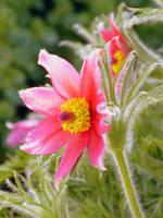 flower by jellybear07