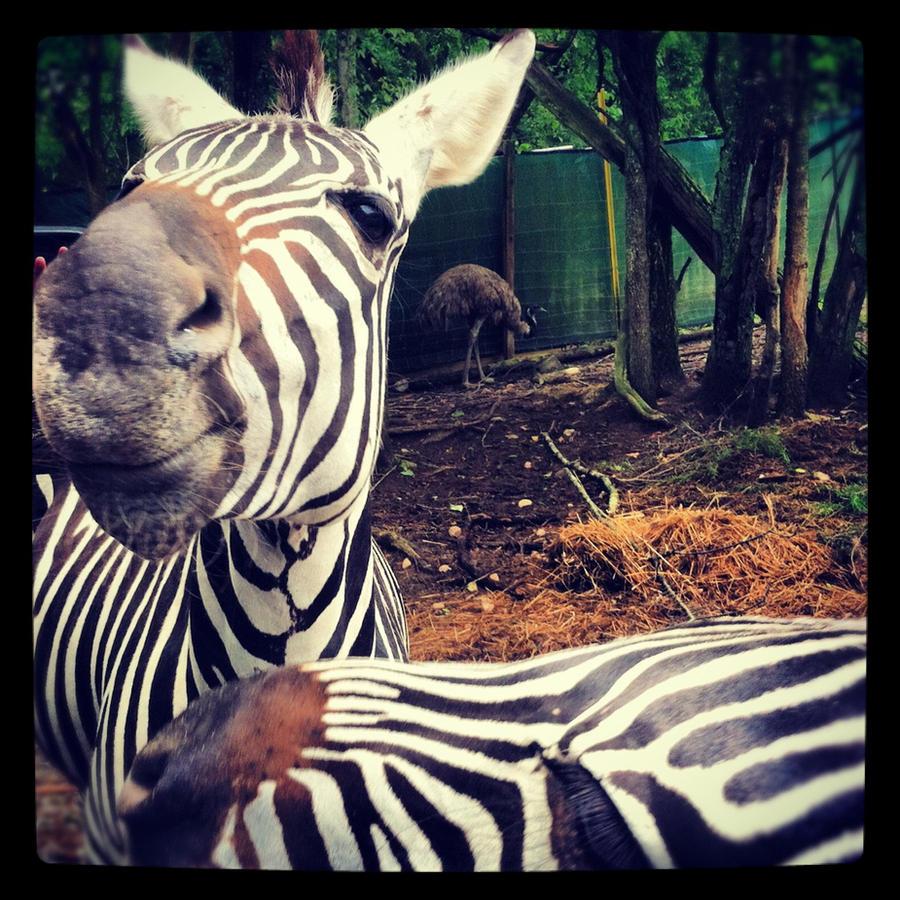 Zebra Pals by strangerswithkandi