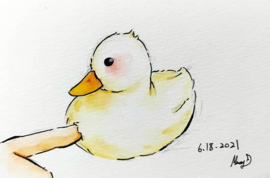 Water Color Duck