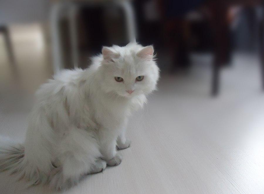 Pets (1) by Hetiru