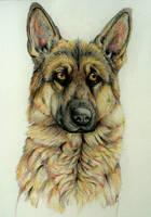 German Shepherd by nonodmon
