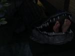 Feeding the aligator 3/4