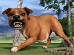 Meet bully dog 3/3