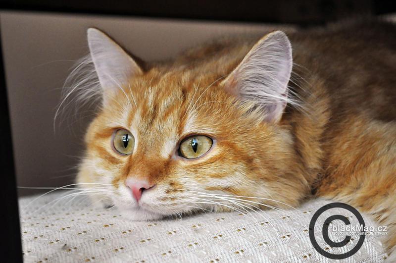Little cat Jethro by perlaque