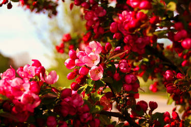 Spring Bloom by AcidAlchemy