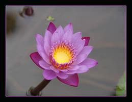 Flower by Mediasvengali