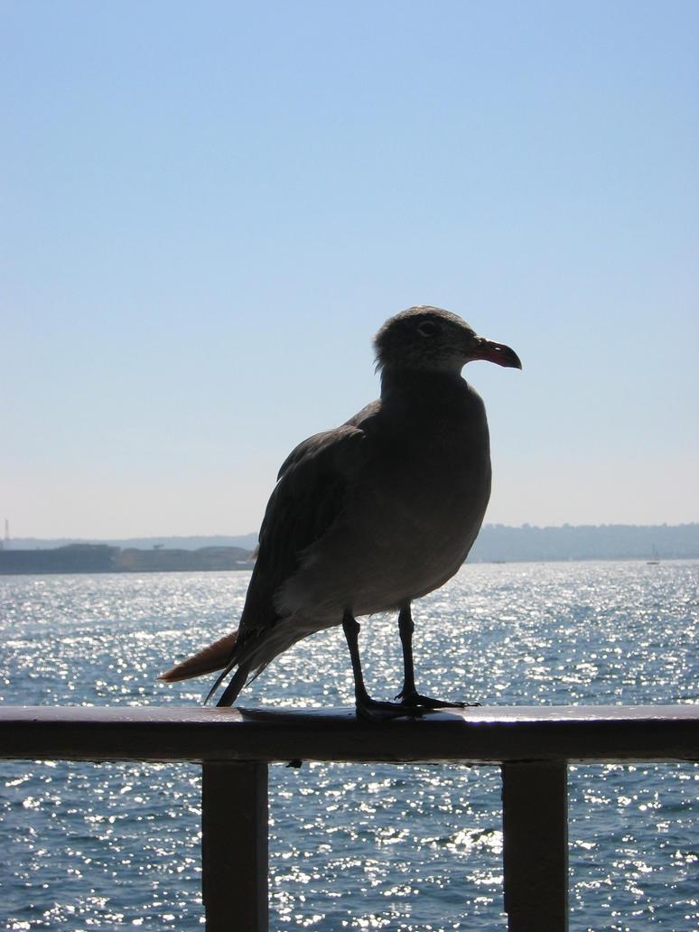 Seagull Silhouette by yarnuh on deviantART