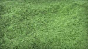 Grass v3
