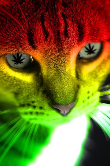 Rasta Cat by fsdoubleflipRasta Cat