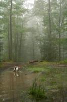 Forest III by AndokaStock