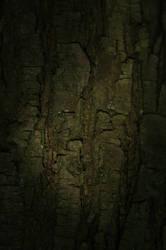 Bark Wood by AndokaStock