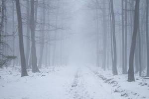 Mist. by AndokaStock