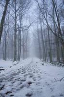 Misty Forest. by AndokaStock