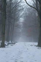 Misty Forest II. by AndokaStock