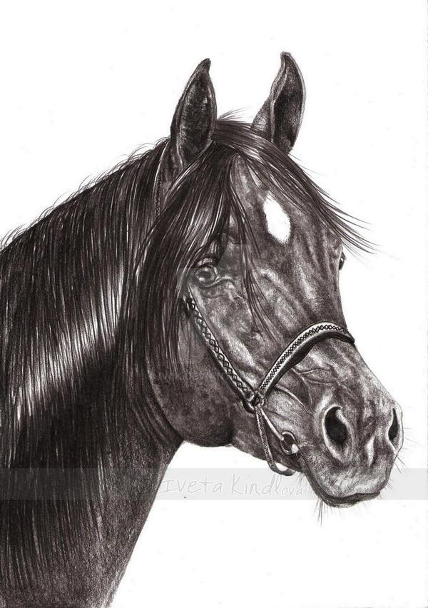 Black arabian horse by IviiK on DeviantArt