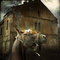 City of horses by admvi