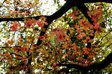 Leaves and Branches