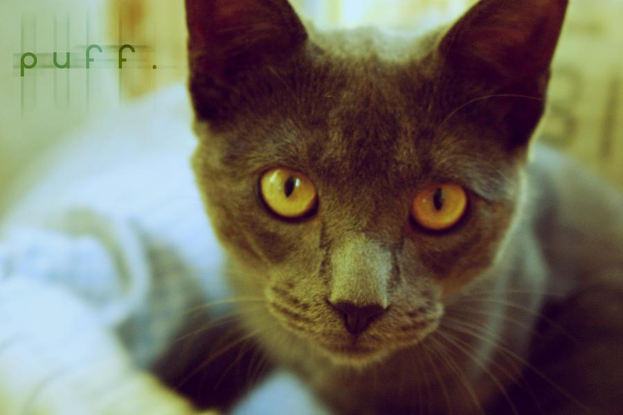Puff the Magic Cat by j-trogen