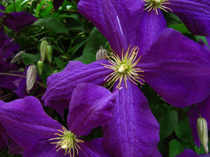 Tendrils and Purple