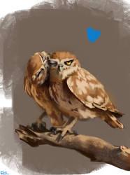 owlove by fdasuarez