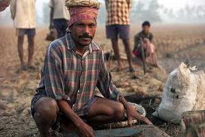 Bengali Workman