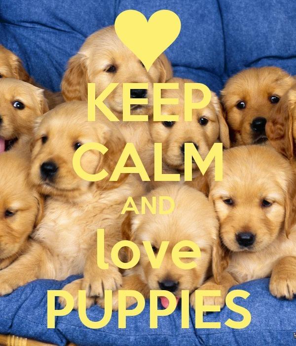 Puppies Google
