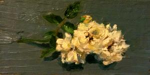 White Rose by Fezte