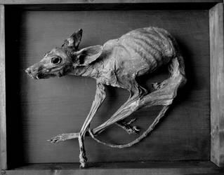 Goupil petrifie by Lamollesse
