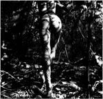 Marcheuse des bois by Lamollesse