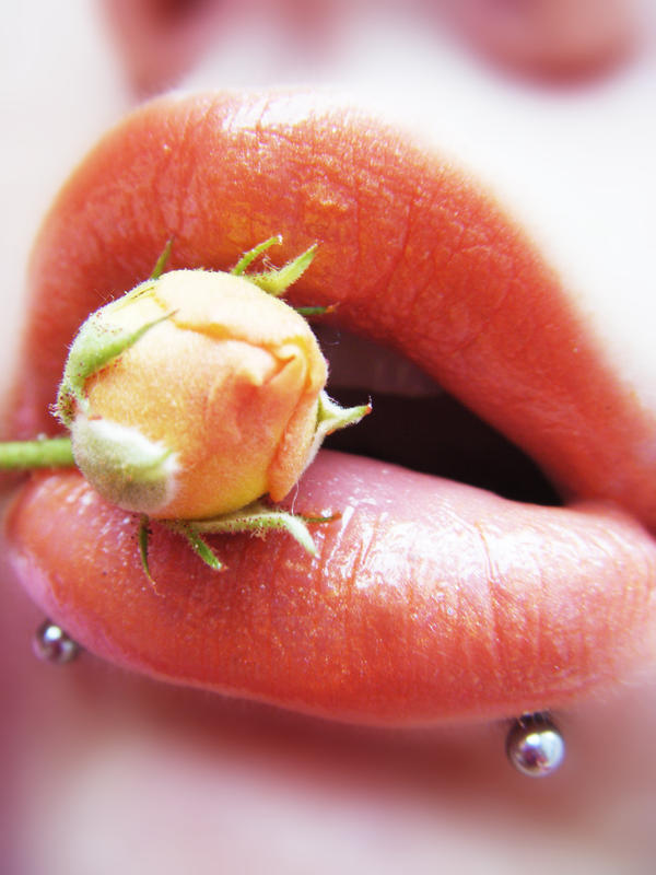 Rose Bud by MissHayleyBee