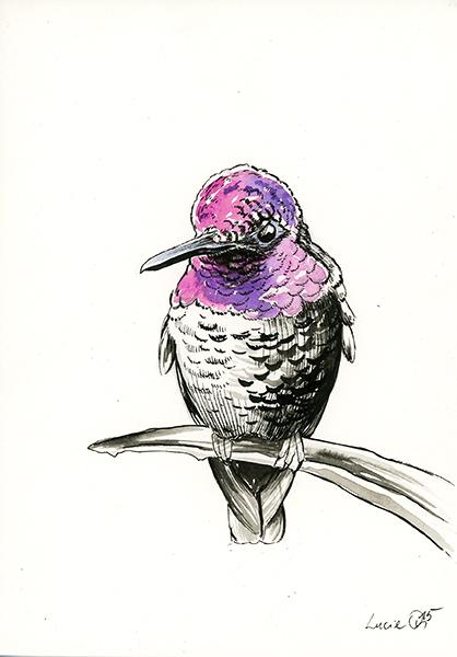 Hummingbird by LucieOn