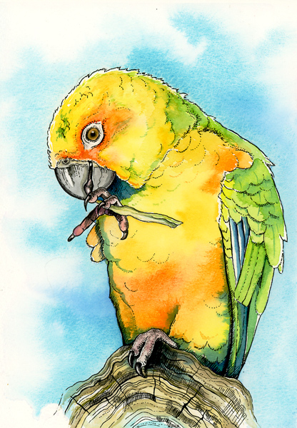 Sun Conure by LucieOn
