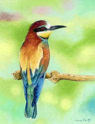 European Bee-Eater by LucieOn