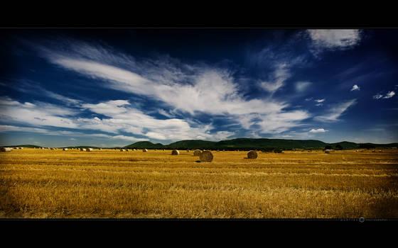 Straw Rolls Field