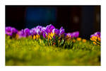 Spring III by SRussellPhotos
