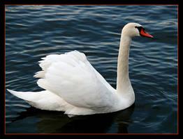 Swan by skarzynscy