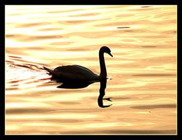 Swan In Sunset by skarzynscy