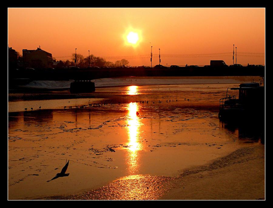 Sunset, Wisla River And Bird by skarzynscy