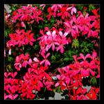 Flowers, Flowers, Flowers And Flowers...