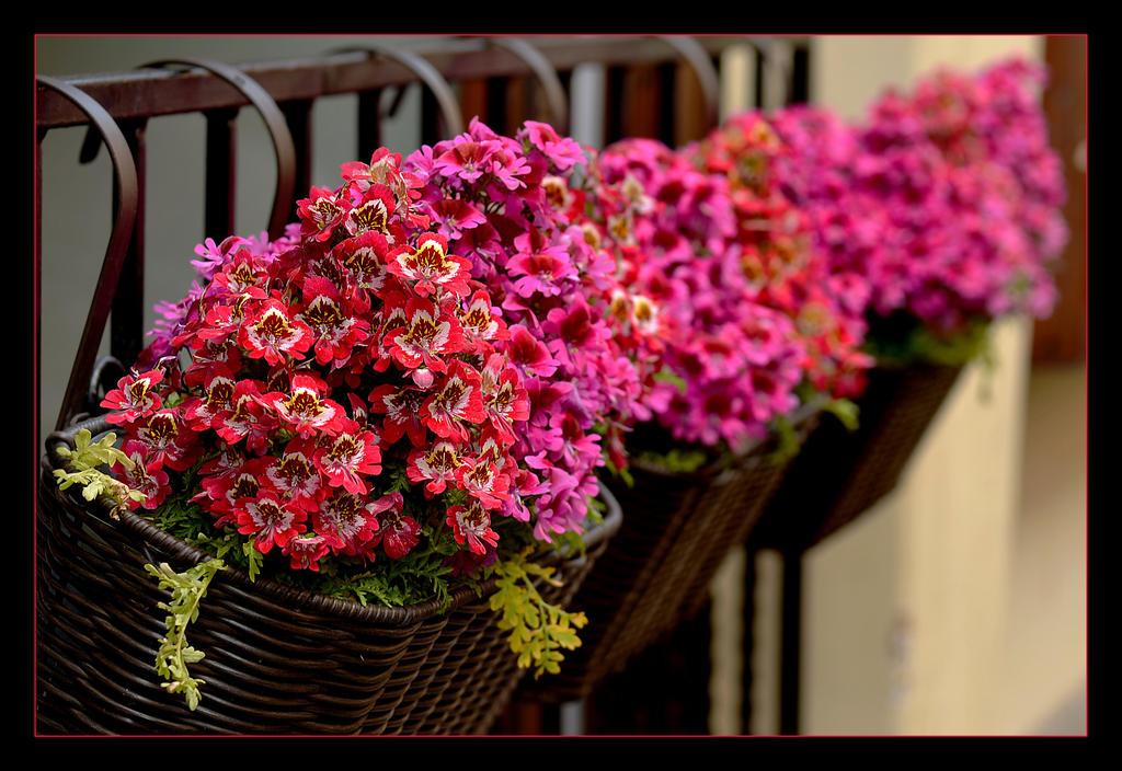 At Someone's Balcony by skarzynscy