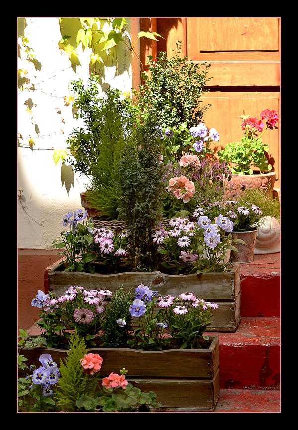 The Smallest Garden In The City by skarzynscy
