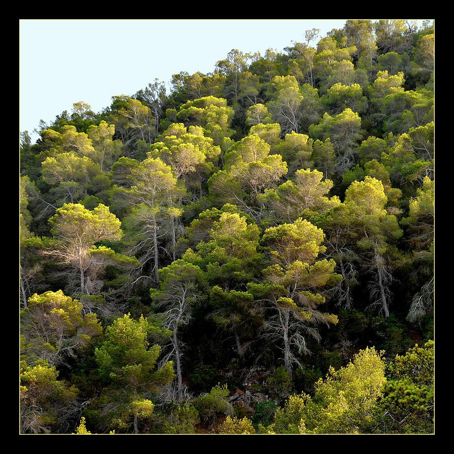 Forest In Ibiza by skarzynscy